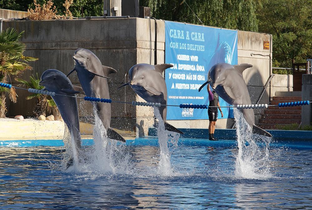 Espectáculo de delfines en el Zoo de Madrid